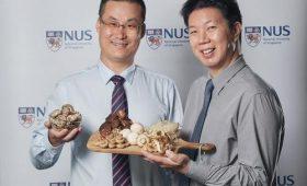 Грибы в диете помогают сохранить когнитивные функции в пожилом возрасте