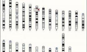 Ученые создали тест, определяющий продолжительность жизни