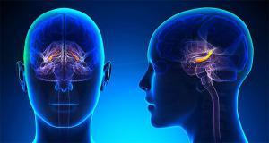 Негативную эмоциональную реакцию на боль объяснили работой миндалевидного тела