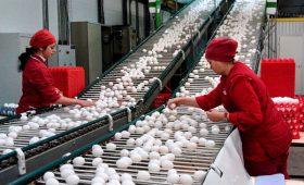 Кредитор решил обанкротить крупнейшего производителя яиц в России