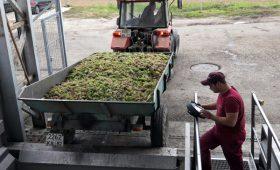 Крым расторг инвестконтракт по одному из крупнейших винных проектов