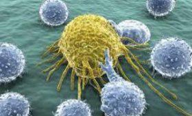 Найдены клетки, которые помогают выживать раку