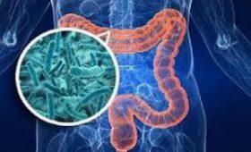 Эксперты раскрыли особую важность кишечных бактерий