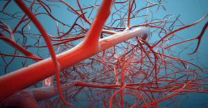 В костях обнаружен новый тип кровеносных сосудов