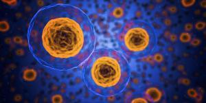 В Шотландии создали полусинтетические клетки человека