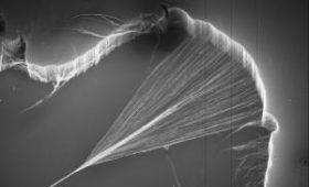 Ученым удалось создать искусственные мышцы
