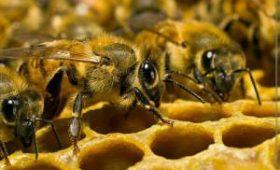 Пчелы поселились у женщины в глазу и питались из слезных протоков