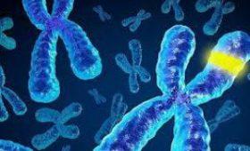 Найден ген, который укажет на рак поджелудочной — медики