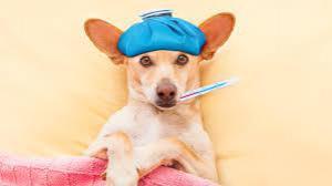 Собачий грипп научился заражать людей