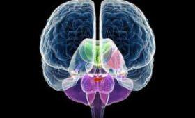 Оставшееся целым полушарие мозга обросло прочными функциональными связями